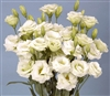 Lisianthus Bridal Green