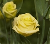 Lisianthus Bridal Yellow