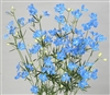 Delphinium Angel Super Sky Blu