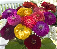 Zinnia Giants Mix
