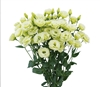 Lisianthus Arosa 2 Green_disc