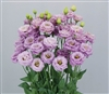 Lisianthus Arosa 1 Grape_disc