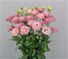 Lisianthus Arosa 2 Peach Pellets