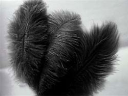 12 Fabulous Ostrich Feathers - Black