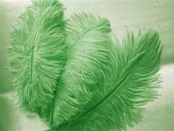 12 Fabulous Ostrich Feathers - Green