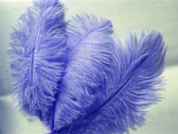 12 Fabulous Ostrich Feathers - Royal Blue