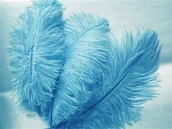12 Fabulous Ostrich Feathers - Turquoise