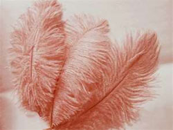 12 Fabulous Ostrich Feathers - Red