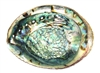 "Abalone Shell 6""+ (Large)"