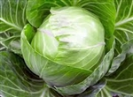 Cabbage, Green ~ 1 medium heads