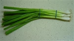 Scallions/Baby Onions, Green ~ 1 bunch