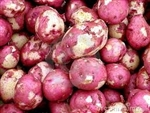 New Red Potatoes with Fresh Skins ~ 1 lb