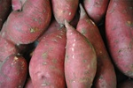 Sweet Potatoes, Covington ~ 2 lbs
