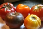 Tomatoes, Heirloom, Mixed, mostly red ~ 1 lb
