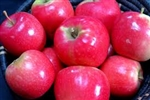 Apples, Pink Lady ~ 1.5lbs