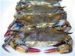 softshell crab