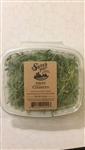 Cilantro Sprout Microgreens ~ .75oz clamshell