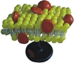 MODEL OF THE CELL MEMBRANE