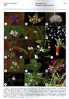 Annals of the Missouri Botanical Garden 96(1). Proceedings of the Third International Rubiaceae Conference