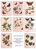 Notecards, Rare Book Print Set - Butterflies and Moths