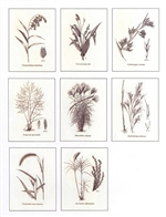 Notecards, Ornamental Grasses, The Grass Manual
