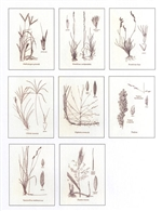 Notecards, Grasses of Texas, The Grass Manual