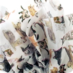 Cats & Kittens Patterned Tissue Paper