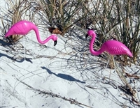 Mini Flamingos