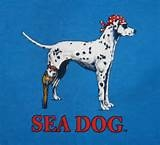 Pirate Dog Logo