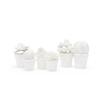 These are a variety of six white porcelain miniature succulents in pots that are sold together.  Each pot contains a different type of succulent of different texture.