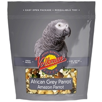 4# A S AFRICAN GREY