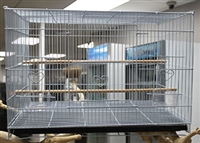 Aviary And Breed Cages Serise - 6505