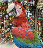 Green Wing Macaw