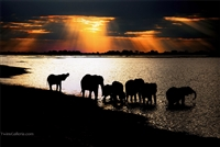 Wild Animal Photography | Elephants quenching their thirst at sunset at the Chobe River in Botswana