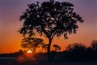 Landscape Photography | Red and Purple African Sunsets Through the Trees in Botswana