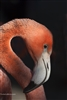 Fine Art Photography | Bird Photography | Flamingo