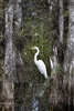 Great Egret | Bird Photography | Fine Art Photography