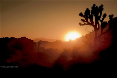 Fine Art Photography | Sunset in the Joshua Trees | Landscape Photography