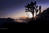 Landscape Photography | Starburst in Silhouetted Joshua Trees at Sunset | Fine Art Photography