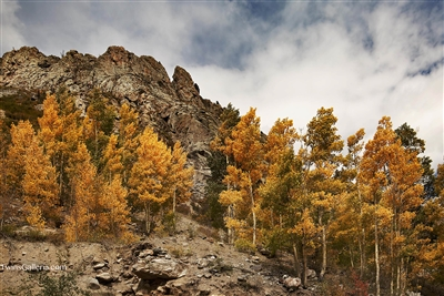 Landscape Photography | Fine Art Photography | Fall Colors in the Trees in Black Canyon