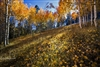 Fall Colors in Black Canyon : Photography Prints