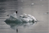 Alaska Eagle Ice Reflection