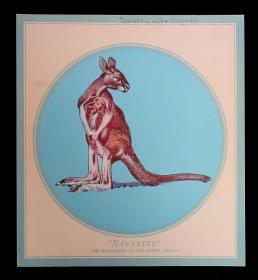 Twelve Drawings of the Animals of the Dixies Circus. . . c1920s