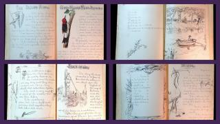 Commonplace Book Illustrated in Pen and Ink and Watercolor- Birds, Spelling, Greek Architecture, The Eye, Trees, Joan of Arc