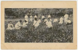 The Bethany Daisies - a field of daisies coincides with graduation. Bethany College.Lindsborg, KS.c1910