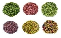 Italian Mini Olive Sampler 6x4oz.