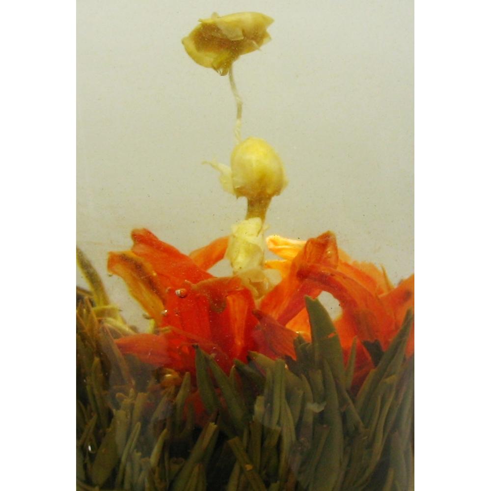 Blooming Tea Flower Fairy Lily Blooming Tea Blooming Tea Wholesale