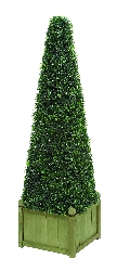 "Amelia 34"" Pyramid Botanical in Boxwood"