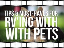 Tips for Your RV'ing Pets