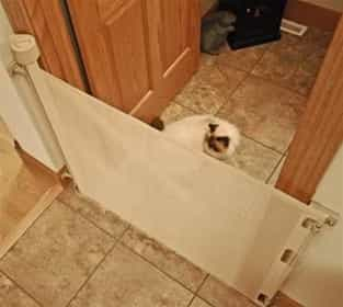 Retractable Tape Barriers Retractable Cat Barrier 52